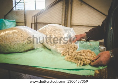 Close up image of a farmer sorting out mohair, from an Angora goat, on a table on a farm in the karoo region of south africa