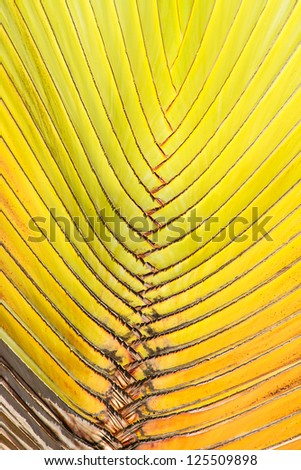 Close-up image of a palm leaf natural background image.