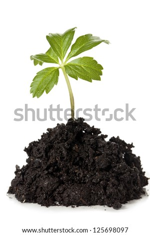 Close-up image of a soil with a growing plant against the white background