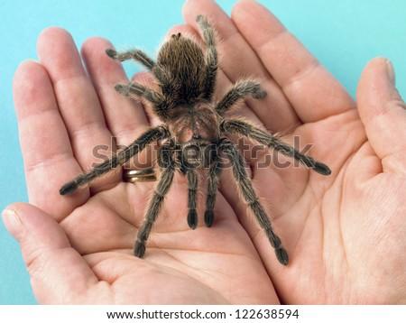 Close-up image of a Tarantula in hands. #122638594