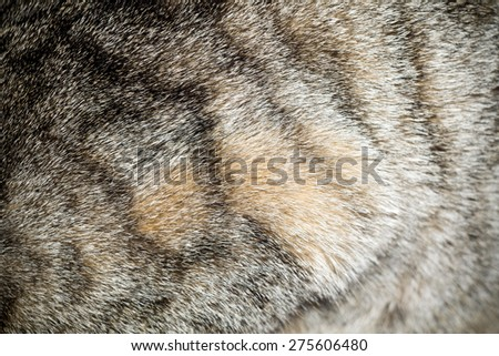 Close up image of cat fur, grey color with black stripes.