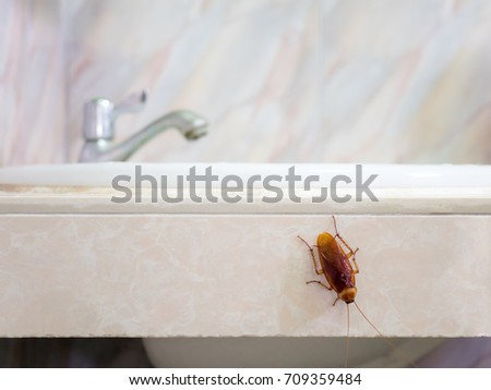 Close-up image of cockroach in house on background of water closet.