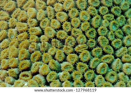 close up image of details of coral from reef off of florida