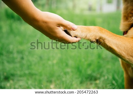Close-up image of dog paw and human hand are doing handshake on nature, friendship