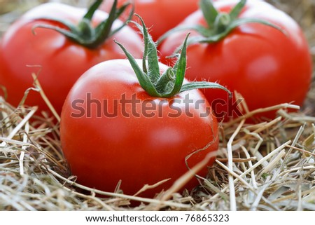 Close up image of fresh tomatoes on straw.