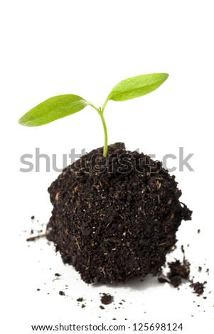 Close-up image of growing plants on the soil against the white surface - stock photo