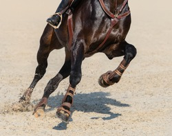 Close up image of legs of running bay sport horse on show jumping.
