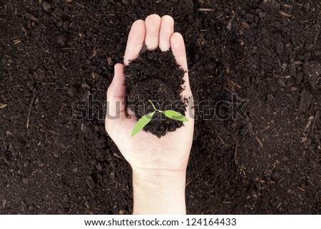 Close up image of plant in hand