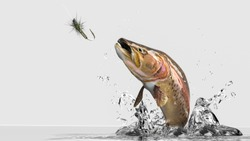 Close up image of rainbow Trout jumping out of water. White background with water splash ad lure bait