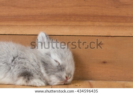 close up in top view of young cute rabbit's face - Shutterstock ID 434596435