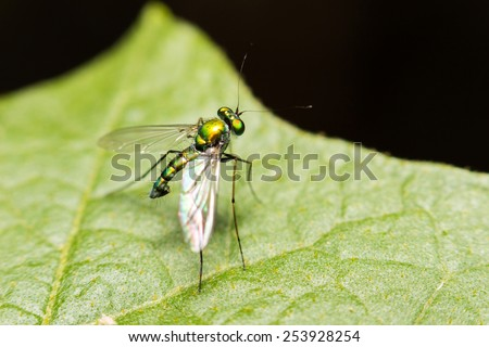 close-up insect in wild nature