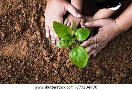 Close up Kid hand and father planting young plant to black soil top view and grunge style #697204990