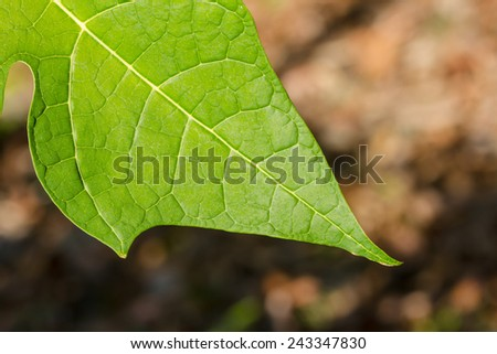 close up leaf background