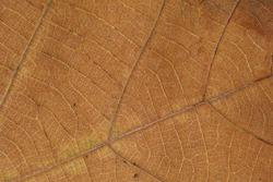 close up leaf texture background