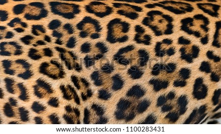 Close up leopard fur background. #1100283431