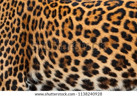 Close Up leopard fur for background. (real fur) #1138240928