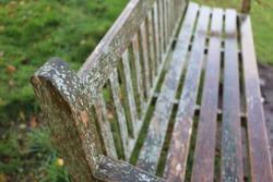 Close up Lichen algae organism growing on a park bench