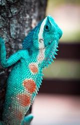 close up lizard