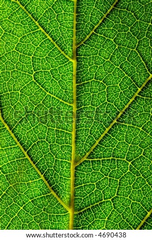 close up look of a green leaf texture.