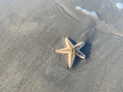 Close up look on stranded  Starfish at Cenang Beach, Langkawi Island , found during low-tide in morning around beach area.