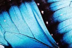 Close up macro of butterfly wings.