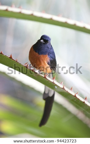 close up macro photo of small pretty paradise bird sitting on spiny branch of succulent agave plant - stock photo