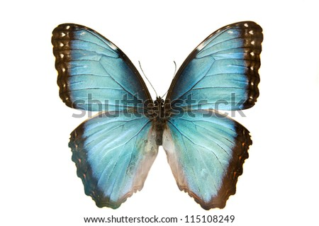 close up macro shot of a blue butterfly isolated on a white background