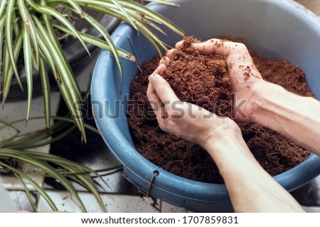 close up male hands holding Coconut coir  blue bucket  Foto stock ©