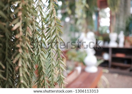 Close up many leaves of tropical fern plant growing in a glasshouse area with an indoor platation zone  #1306113313