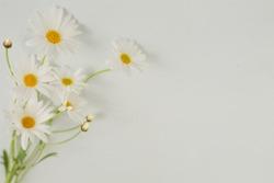 close up Margaret flower on white background