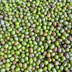 Close up mungbean or green beans have health benefits because of antioxidants, nourishing the skin, hair and stomach protection