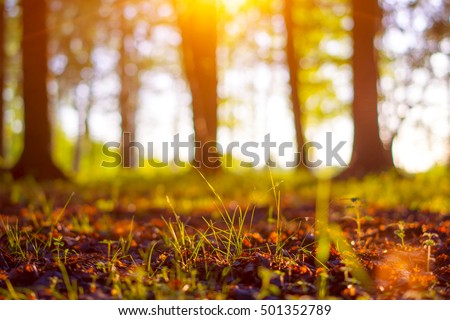 Close up nature landscape. Flowering green forest on sunset, spring background. Nature forest ground in the park during spring. Blurred forest background with copy space. Ecology and nature concept.