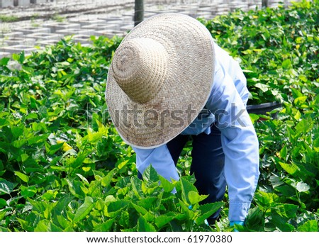 Close up of a agricultural worker taking care of nursery crop