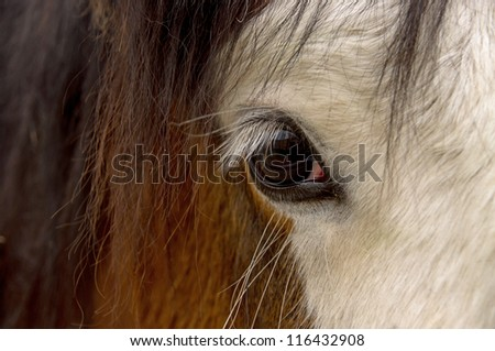 Close up of a beautiful horse eye