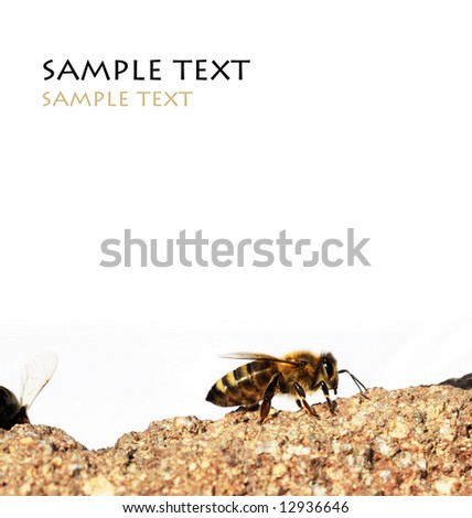 close-up of a bee on a stone against white background