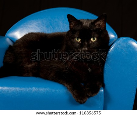 Close up of a black cat sitting in a blue mini chair with black background