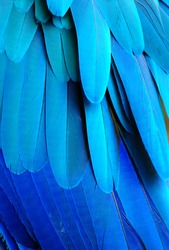 Close up of a blue macaw parrots feathers