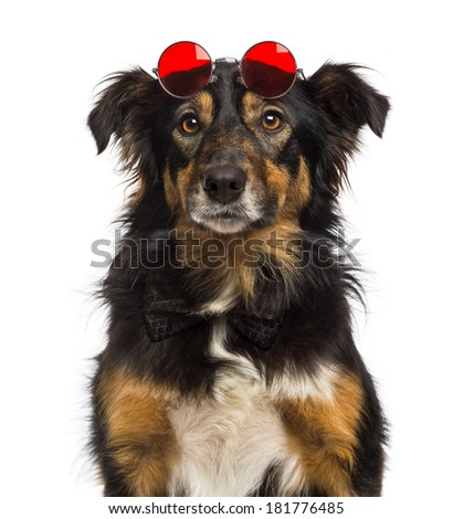 Close-up of a Border collie wearing red round lenses, isolated on white