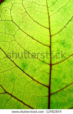 close up of a bright green leaf