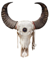 Close up of a Buffalo skull isolated on white background