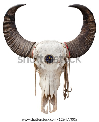 Close up of a Buffalo skull isolated on white background - stock photo
