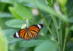 Close up of a butterfly perched ongreen foliage