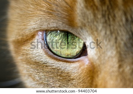 close up of a cat eye