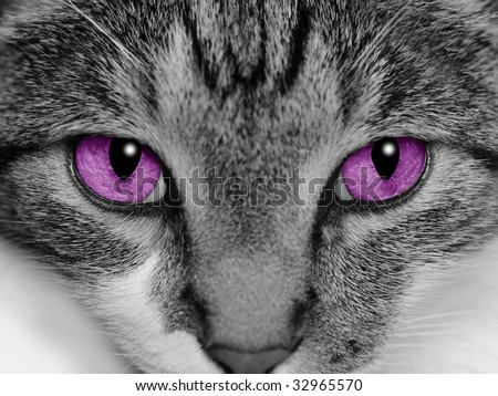 Close-up of a cat's face with selective coloring of her bright purple eyes.