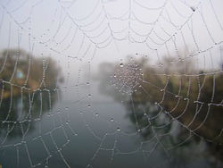 Close up of a cobweb or spiderweb with water drew drop in morning mist against a blurry view of river with trees on both sides of the riverbank. Sanjiang Dong Autonomous County, Guangxi, China