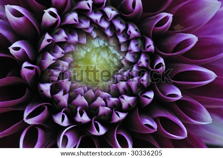 Close-up of a colorful dahlia showing its patterns, details, and vibrant colors