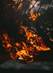 Close up of a conifer tree engulfed in flame