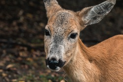 close up of a cute deer in the forest