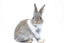 Close-up of a cute rabbit in a white scene Turn to look at the front
