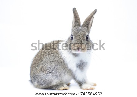 Close-up of a cute rabbit in a white scene Turn to look at the front Foto stock ©